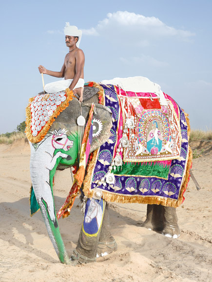 10-india-elephant-painted-white-horse-580v