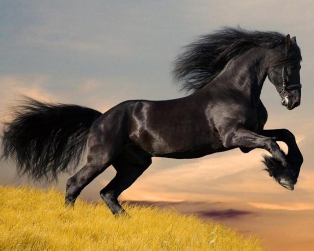 black_horse_running