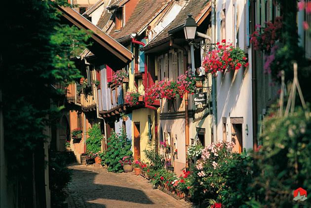 Eguisheim-zoom-fleurs-volet