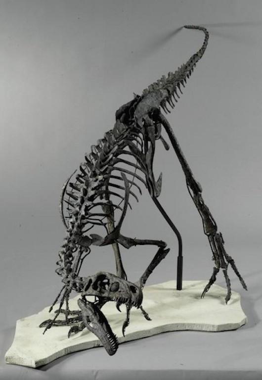Ornitholestes-skeleton-550