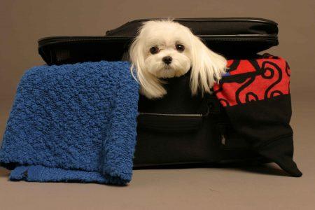 Khách sạn của bạn có phục vụ được đối tượng du khách đặc biệt này?