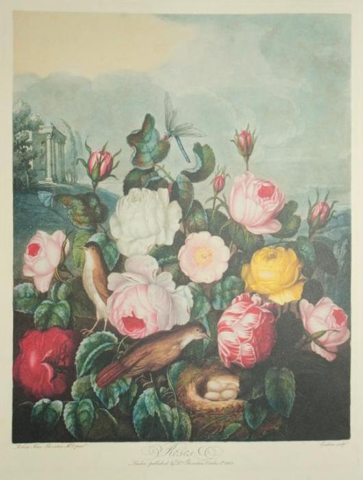 Vacheron-Constantin-Métiers-d'Art-Florilège-–-ROSE-CENTIFOLIA-WATCH