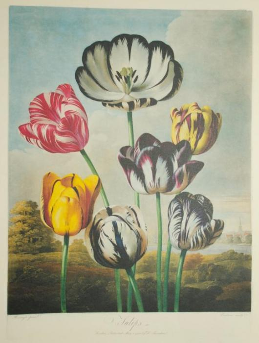 Vacheron-Constantin-Métiers-d'Art-Florilège-–-Tulip-Watch-2015